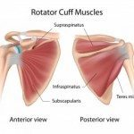 Pilates for Triathletes: Swim Part II. Rotator Cuff Muscles