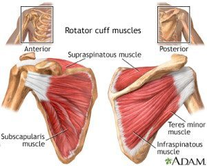 rotator-cuff-shoulder