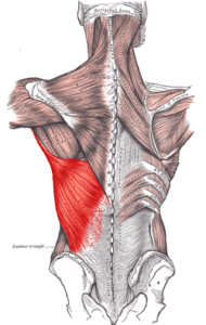 Lat-elbow-pain