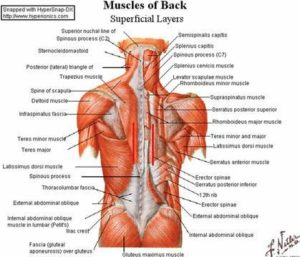 posture-scapula